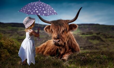 Mi paraguas mágico