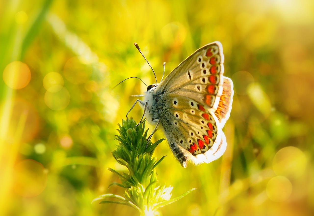 verano, mariposa