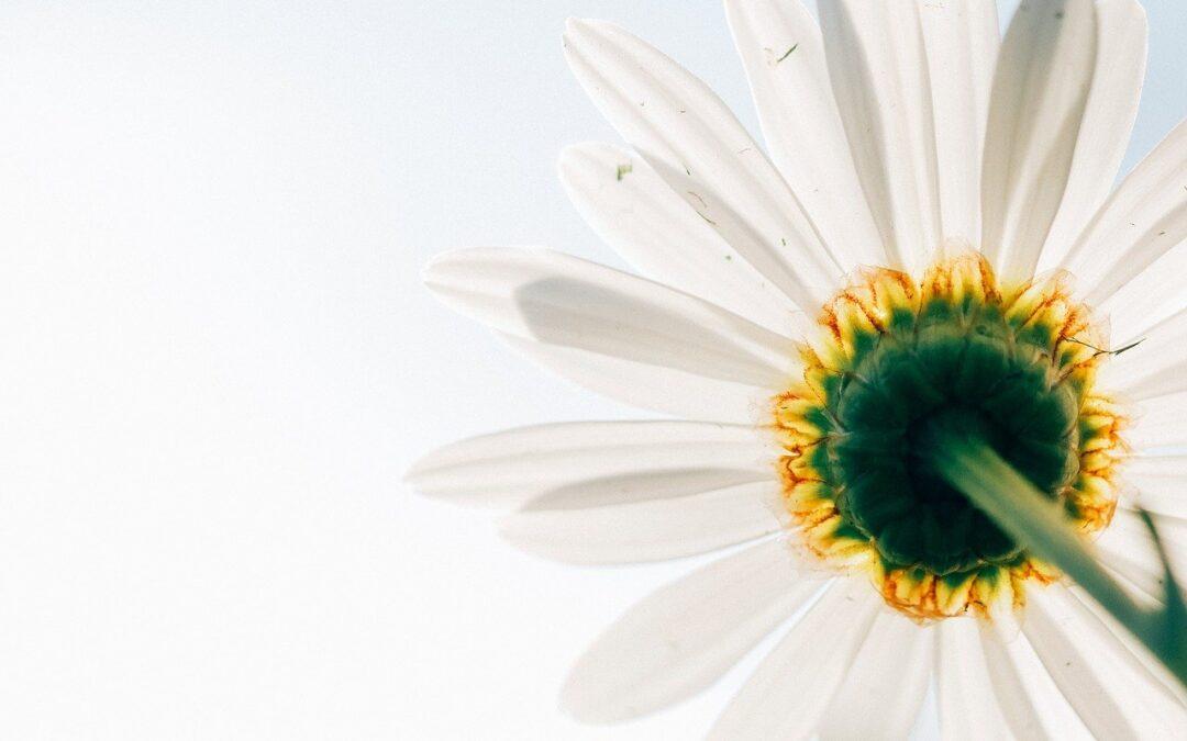 Blanca luz de primavera